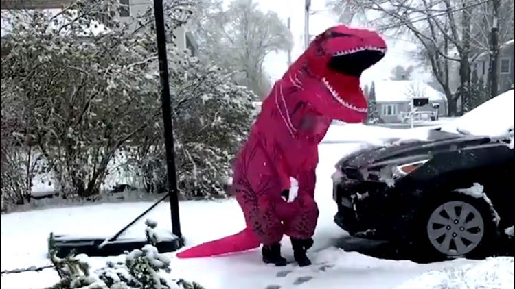 T-Rex enjoys a snowy spring day in New England