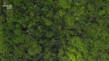 The World's Deadliest Tree Creates 'Toxic Rain'