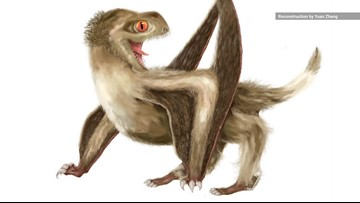 New Finding Pushes Origin of Feathers Back by 70 Million Years
