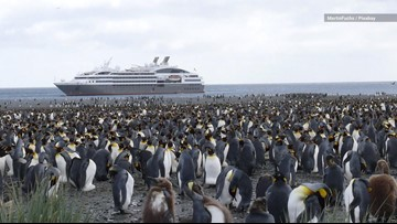 Tourists May Be Passing Human Diseases to Antarctic Penguins