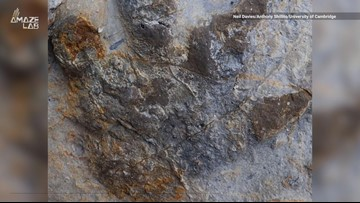 'Treasure Trove' of 85 Dinosaur Footprints Discovered in England