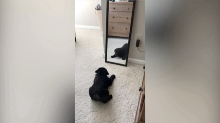 This Pup Tried to Make Friends With His Reflection in This Hilarious Video