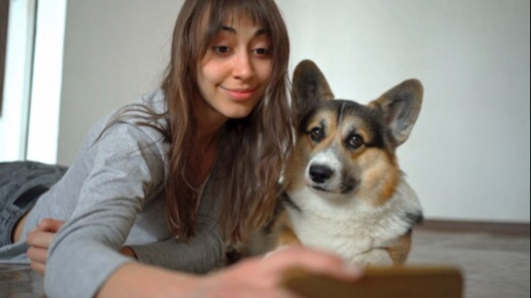 Does Your Dog Understand Your Endless Video Calls During Quarantine?
