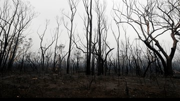 3 Americans killed in crash of firefighting tanker plane in Australia