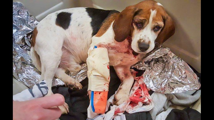 Ap Dogs Thrown From Vehicle A Usa Ny