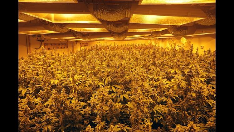 Xxx Xxx Trevor Hughes Marijuana Growing 2018 2340 Jpg A Ent Usa Nv