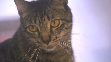 Tips for pet owners as New Year's Eve approaches
