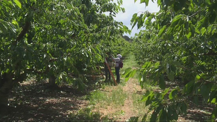 Oregon woman raises thousands of dollars to provide hydroflasks for orchard workers