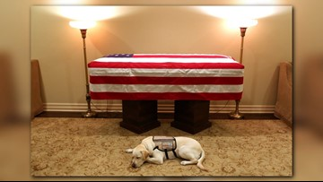 'Mission complete': George H.W. Bush's service dog spends moment with 41st president's casket