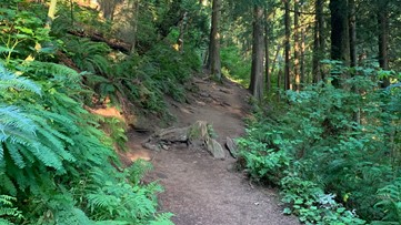 10 essentials every hiker should have to stay safe on trails