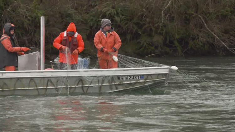 Blaming tribal fishing practices for decline in salmon is 'misinformation,' Washington officials say