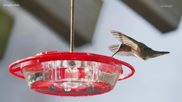 Reports of sick birds continue in Washington after call to remove feeders