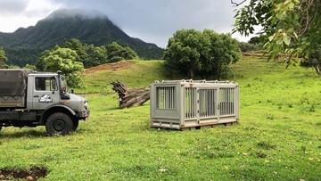 "Tour the Oahu ranch where Chris Pratt filmed ""Jurassic World: Fallen Kingdom"""