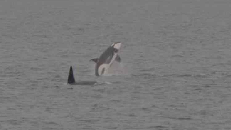 Orca Superpod