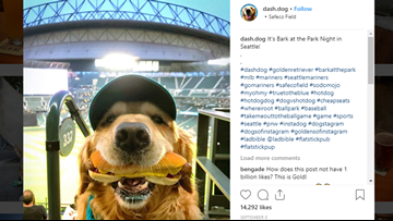 Meet the dog who went viral at Safeco Field