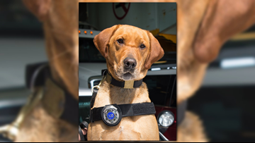 State Patrol K9 Sonyi dies from job-related illness
