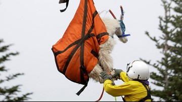 101 mountain goats relocated from Olympic National Park in August
