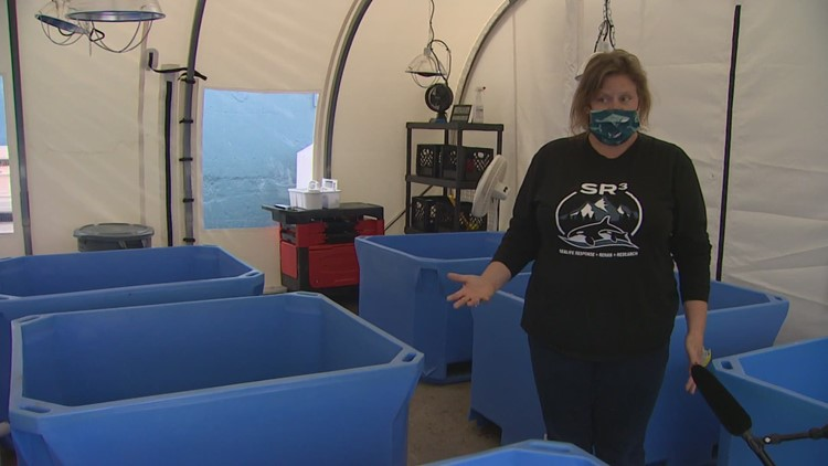 New hospital in Des Moines will treat marine wildlife in the Northwest
