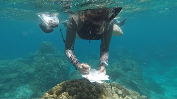 Mapping project started by Paul Allen aims to save dying coral reefs