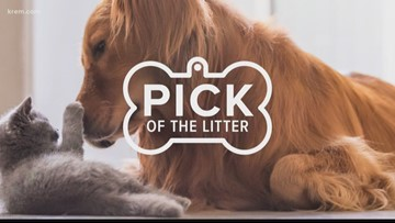Meet this week's Pick of the Litter, triplet puppies, on Jan. 7, 2019