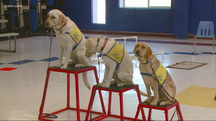 National Canine Companion Program provides free, trained dogs to those with disabilities