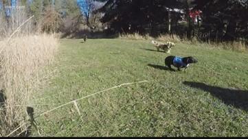 Wiener Dog Racing