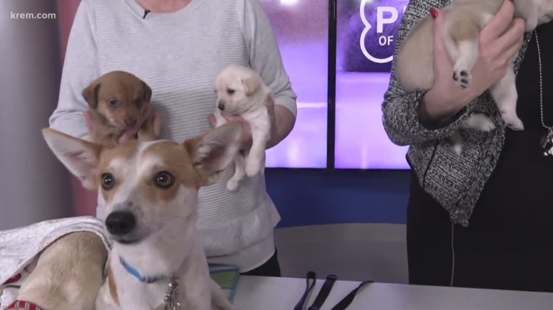 Meet this Week's Pick of the Litter – complete with adorable puppies!