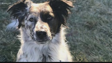 City council working on bill to prevent heated sidewalk accidents after Spokane dog's death