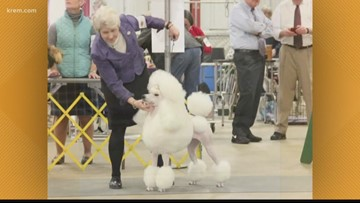 900-plus dogs competing in show at Kootenai County Fairgrounds