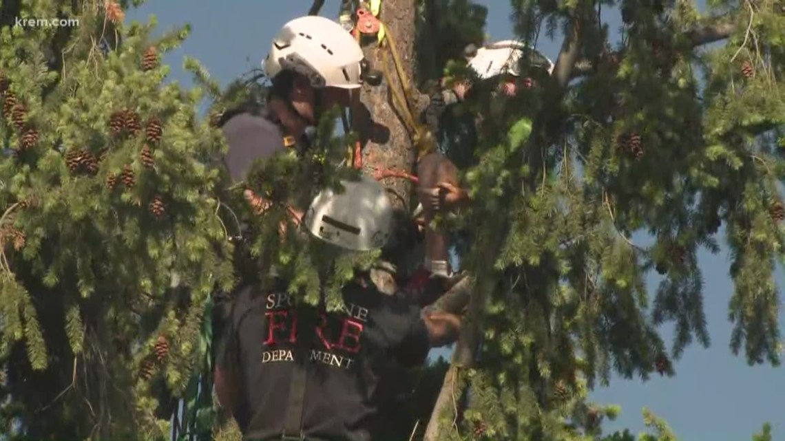 9-year-old rescued from 80 foot tree near Garry MS