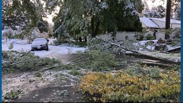City of Spokane reports 654 sites of tree debris after snow storm