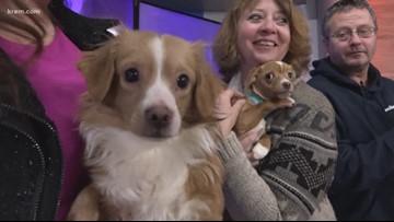 Meet this week's Pick of the Litter pups! (Feb. 4, 2020)