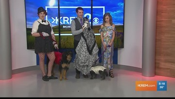 Divino Fashion Show & Canines on the Catwalk