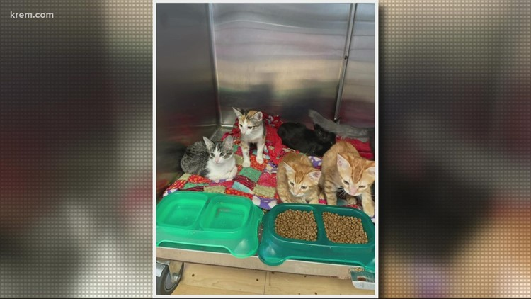 Meet this litter of kittens, this week's Pick of the Litter