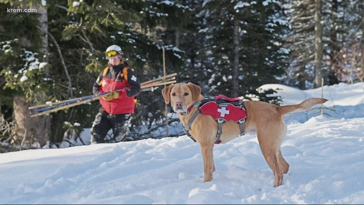 Meet Schweitzer's avalanche rescue dogs, Murphy and Abbey