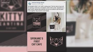 'Kitty Cantina' Cat Cafe has eyes on N. Spokane