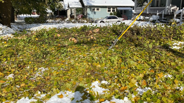 'I couldn't believe it': Tree damage from snowstorm destroys Manito yard