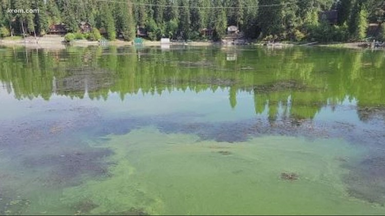 Health advisory issued for Hayden Lake after discovery of blue-green algae