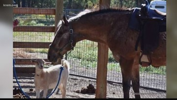 Horse rescued in Spokane Co. is going blind, goat helps him get around