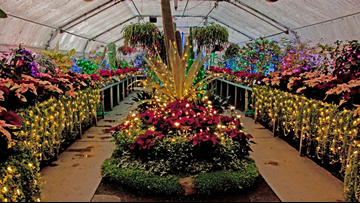 Christmas lights return to Manito Park's Gaiser Conservatory next Friday