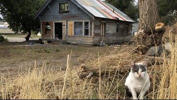 Neighbors work to save dozens of feral cats before East Central home is demolished