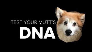Vote for your favorite dog to win a DNA test!