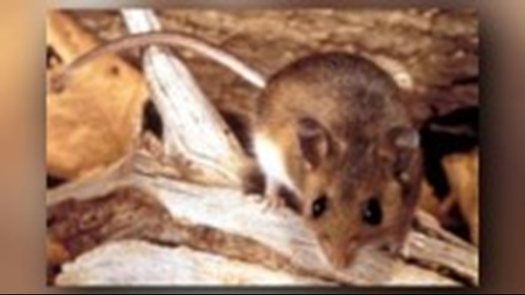 Grant County Health District officials said the person is believed to have been exposed to contaminated deer mouse dropping while cleaning out their vehicle.
