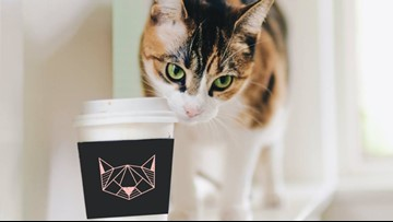 Kitty Cantina, Spokane's first cat café, plans for early April opening