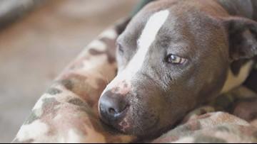Yakima officials lift city ban on pit bulls