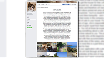 Here's how you can get paid to take care of cats on a Greek island