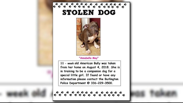 Companion Dog Of Terminally Ill 8-Year-Old in Burlington Stolen After Break-In
