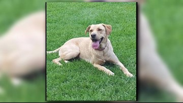 Spirit Lake family looking for answers after dog shot in driveway