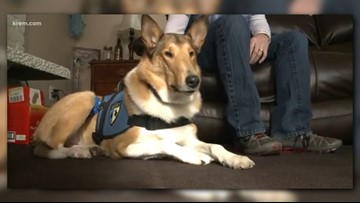 Spokane veteran's family decides to put down service dog after cancer diagnosis