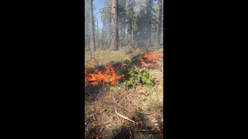 Fire officials to start prescribed burns in Colville National Forest as fire season comes to an end